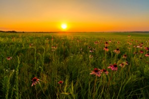 Midwest, flowers, field