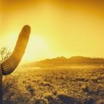 Southwest, sun, heat, warmth, cactus, desert, Arizona, shutterstock_232246297