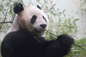 Panda Power, Panda Energy, private equity