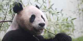 Panda Power, Panda Energy, private equity