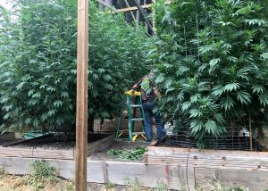 Marijuana, pot, legislation, private equity, venture capital, Congress, law