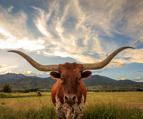 Texas, Texas County & district, Vista Equity Partners, Bullhorn Inc, private equity,