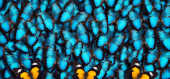 Rainmaker 50 butterfly background