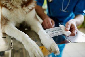 Nordic Capital, veterinary care, AniCura, healthcare, Mars Inc, merger, M&A