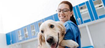 Oak Hill Capital Partners, Vetcor, animal health, veterinary, healthcare, merger, M&A, private equity