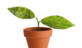 Buyouts Insider, Gen II Fund Services, private equity, venture capital, emerging managers