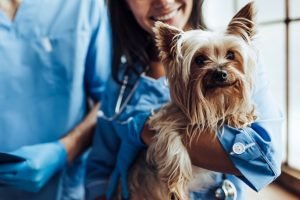 veterinary medicine, private equity, Quad-C Managment, JAB Holding, merger, M&A, healthcare
