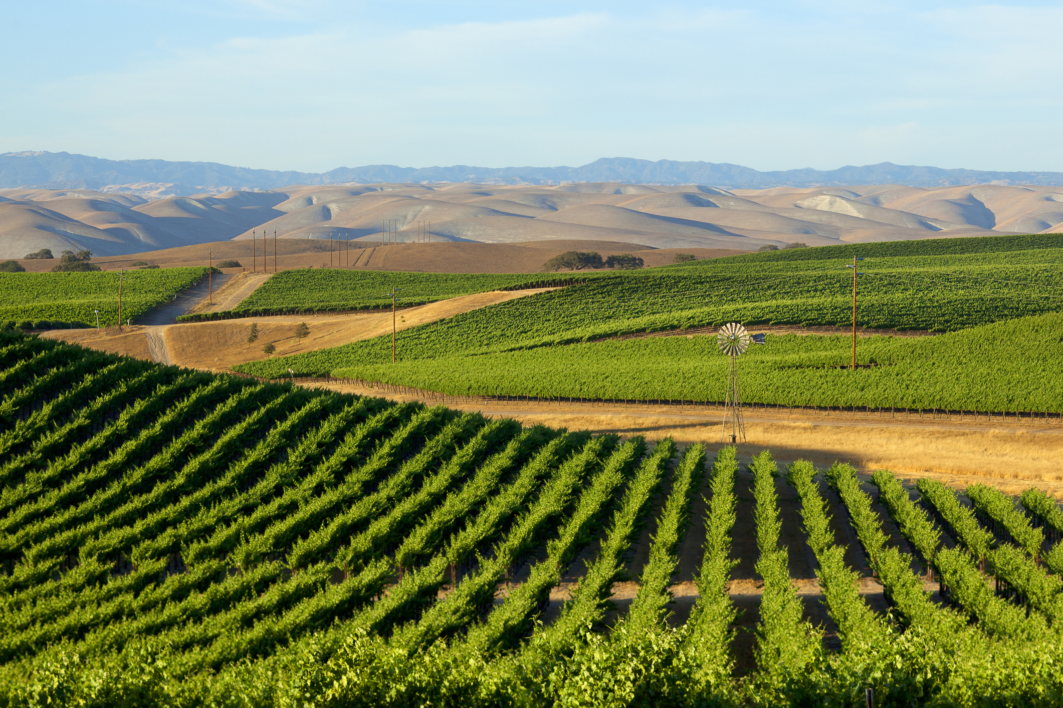 Vineyard In California's Central Valley | PERE
