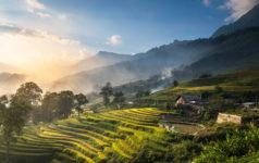 Rice fields Northwest Vietnam