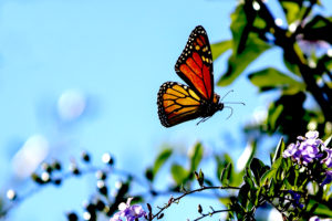 Butterfly to devote 10 percent of new fund's net profits to