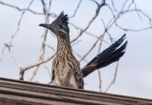new mexico, roadrunner, state bird, private equity
