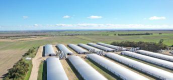 Southern Cross Poultry Fund - Murray Bridge - AAM Investment Group