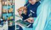 Gryphon Investors, Heartland Veterinary Partners, veterinary care