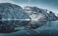 Aquaculture in Norway