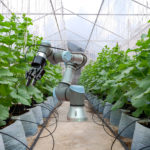 Robot on smart farming concept