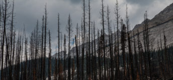 Burned trees on a background of dark sky