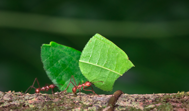 ant, leaf, small, tiny