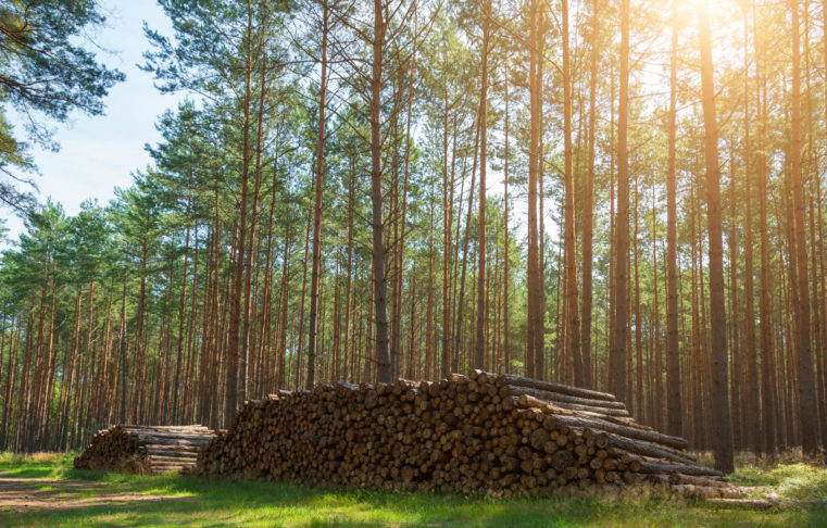 Timber, wood, timberland, forestry