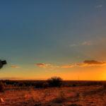 Windmill, Australian outback