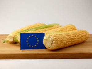 Corn on the cob with EU flag