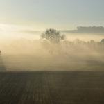 Farmland, fog