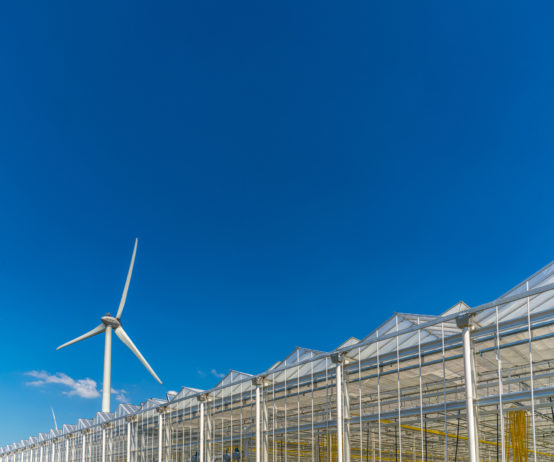 Greenhouse and wind turbine