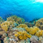 Coral Reef - Great Barrier Reef