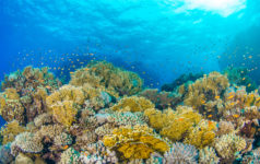 Coral Reef - Great Barrier Reef
