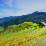 Rice fields, Asia