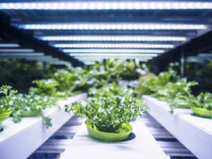 Greenhouse, vertical farming indoor ag, agtech