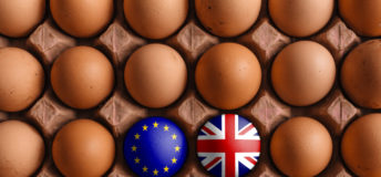 Brexit, eggs, food, agriculture
