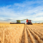 Harvest, wheat, farmland, Australia, crops