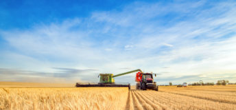 Harvest, wheat, farmland, Australia, crops