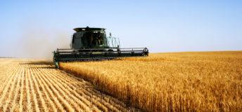 Grain farm, wheat harvest