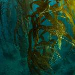 Seaweed farm, California