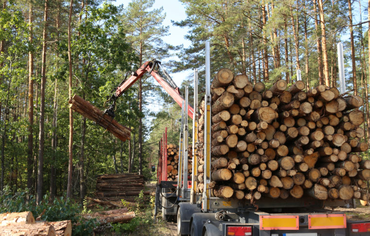 Timber, forest, harvest, truck