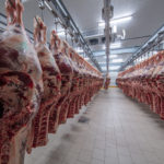 Meat industry, meats hanging in the cold store slaughterhouse, cattle