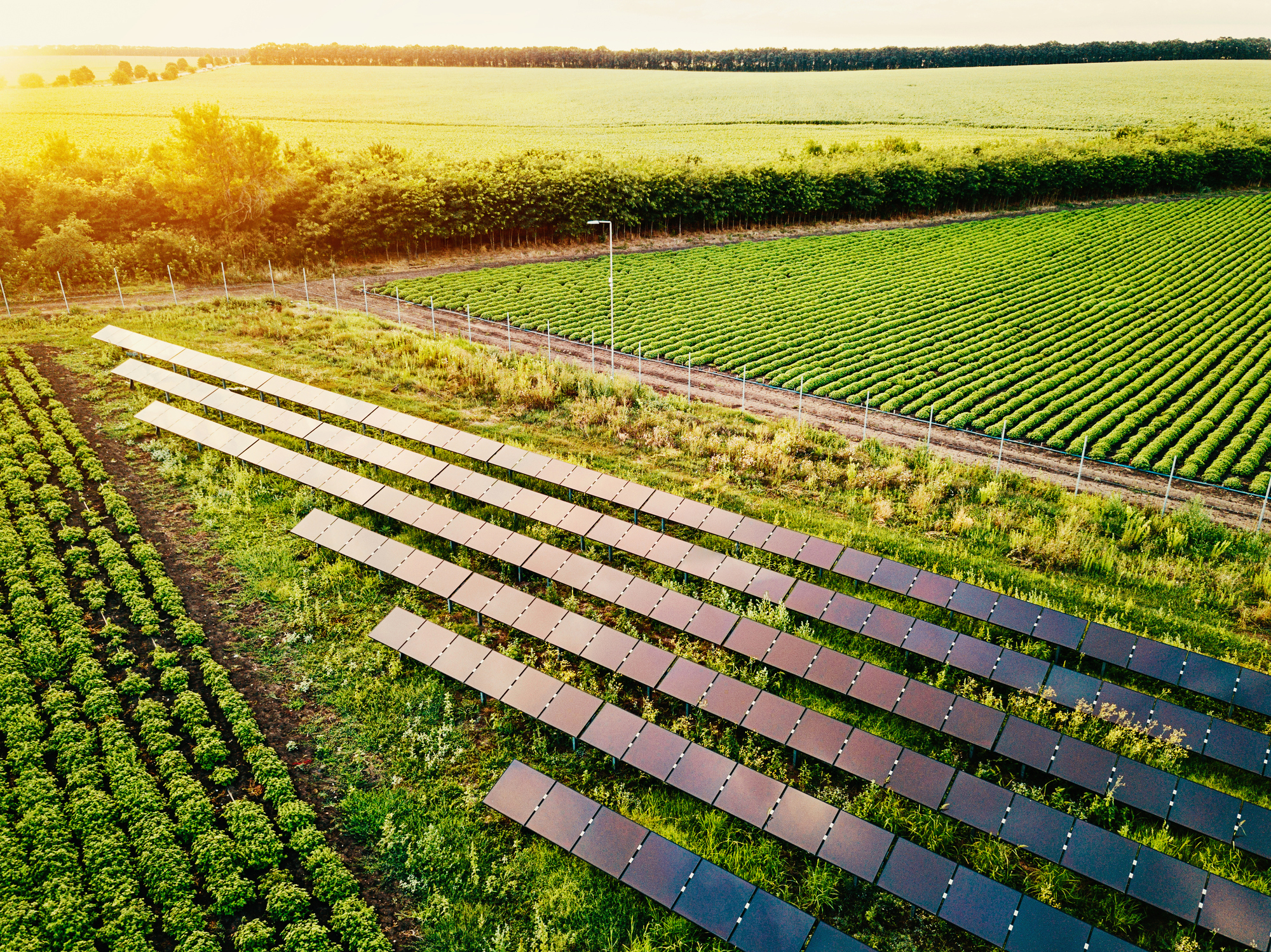 agriculture, solar