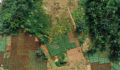 Farm field, Africa, Nigeria