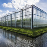 Tomato Greenhouse, controlled environment ag, CEA
