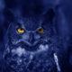 blue owl bird night watching