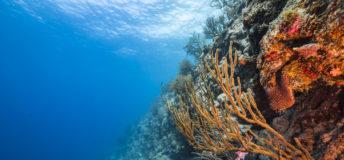 ocean, coral, marine life, aquaculture
